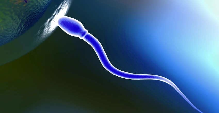 cell phones are lowering sperm count